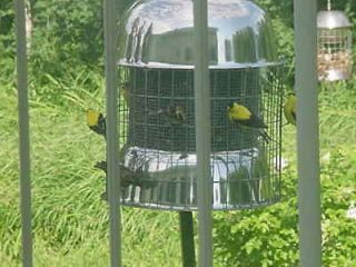 bird feeder in Seed Feeders