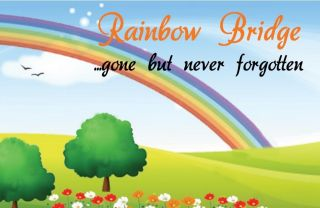 Rainbow Bridge Poem Bookmark / Keepsake Card   Pet Cat Dog Bereavement