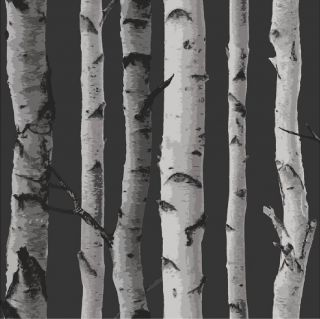 New Birch Tree Woods Branches Jungle Forest Print 10M Wallpaper Roll