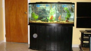 GALLON BOW FRONT FISH TANK EVERTHING INCLUDED FILTERS DECORATIONS FISH