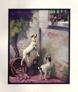 1910 John Edwin Noble SMOOTH HAIRED FOX TERRIER Print Chapter Dog